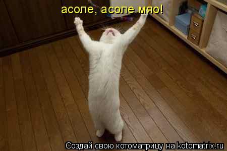 Котоматрица: асоле, асоле мяо!