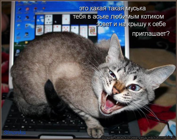 Котоматрица: тебя в аське любимым котиком приглашает? зовет и на крышу к себе это какая такая муська