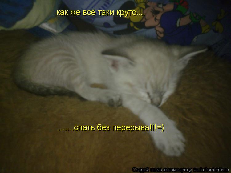 Котоматрица: как же всё таки круто.... .......спать без перерыва!!!=)