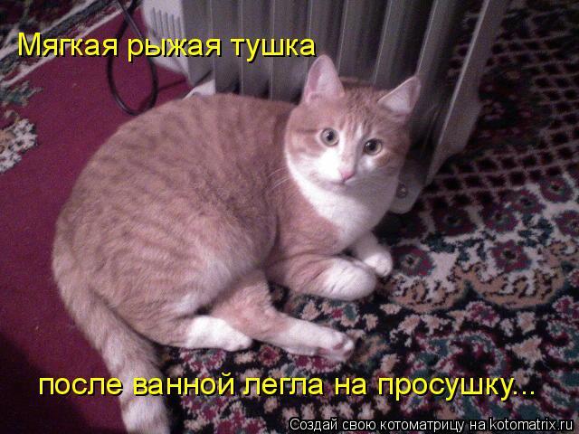 Котоматрица: Мягкая рыжая тушка после ванной легла на просушку...