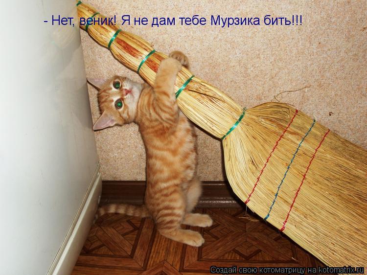 Котоматрица: - Нет, веник! Я не дам тебе Мурзика бить!!!