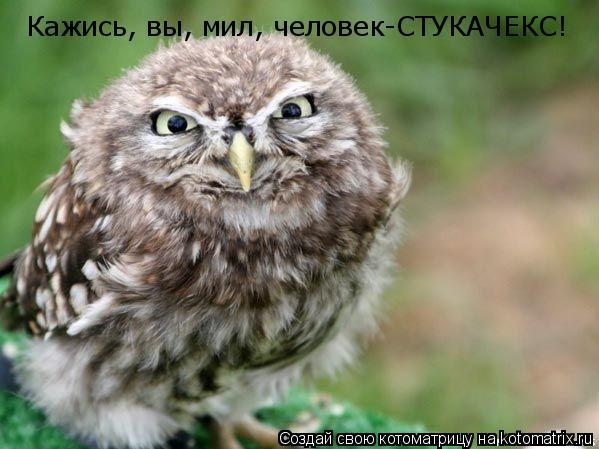 Котоматрица: Кажись, вы, мил, человек-СТУКАЧЕКС!