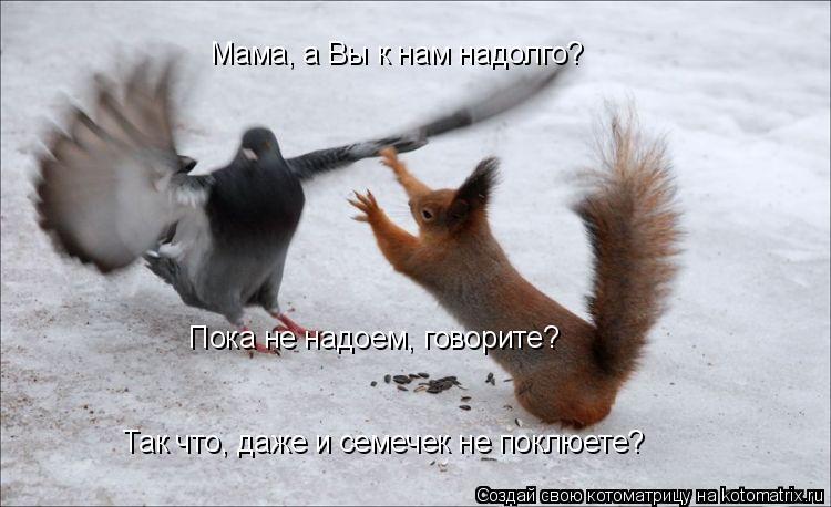 Котоматрица: Мама, а Вы к нам надолго? Пока не надоем, говорите? Так что, даже и семечек не поклюете?