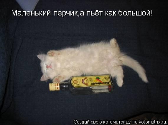 Котоматрица: Маленький перчик,а пьёт как большой!