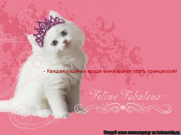Котоматрица: - Каждая кошечка вроде меня может стать принцессой! - Каждая кошечка вроде меня может стать принцессой!