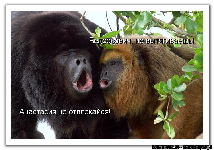 Котоматрица: Бедросович, не вытягиваешь! Анастасия,не отвлекайся!
