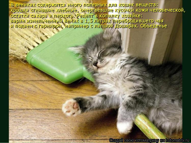 Котоматрица: В вениках содержится много полезных для кошек веществ: крошки сгнившие хлебные, омертвевшие кусочки кожи человеческой, остатки сахара и пе