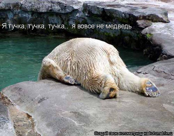 Котоматрица: Я тучка, тучка, тучка,,  я вовсе не медведь