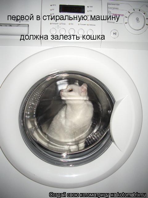Котоматрица: первой в стиральную машину должна залезть кошка