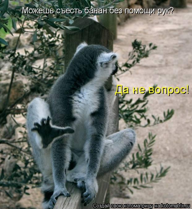 Котоматрица: Можешь съесть банан без помощи рук? Да не вопрос!
