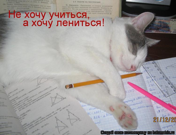 Котоматрица: Не хочу учиться, а хочу лениться!