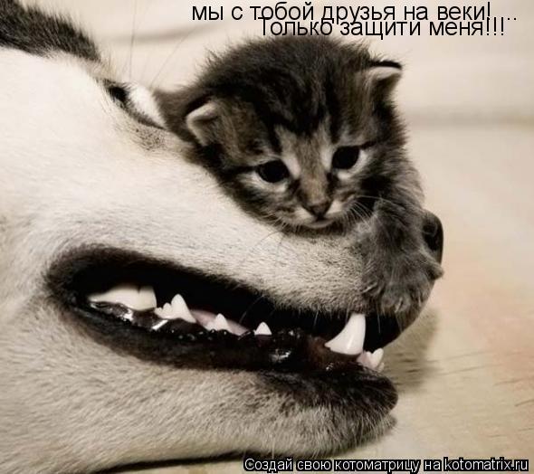 Котоматрица: мы с тобой друзья на веки!.... Только защити меня!!!