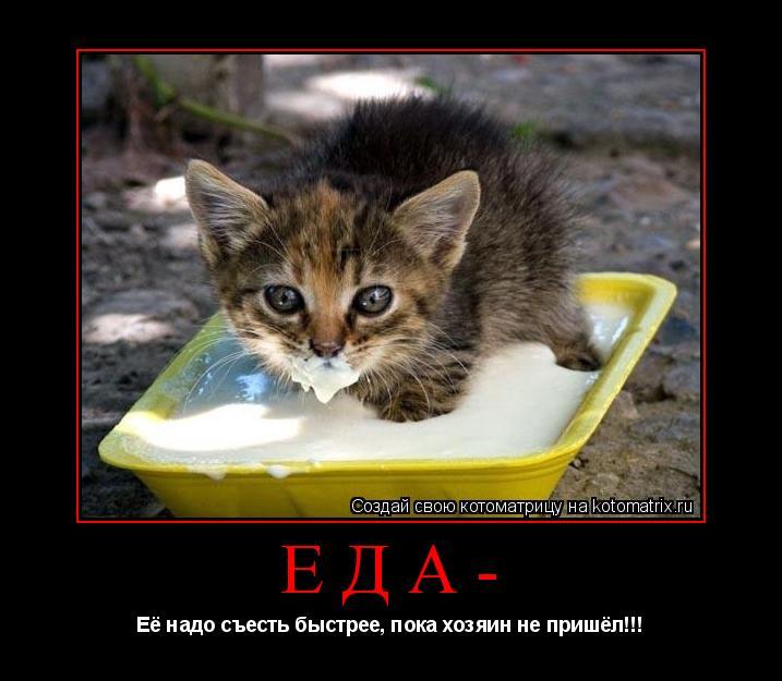 Котоматрица: Еда- Её надо съесть быстрее, пока хозяин не пришёл!!!