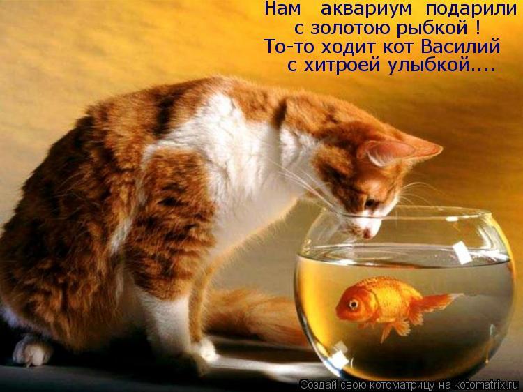 Котоматрица: Нам   аквариум  подарили  с золотою рыбкой ! То-то ходит кот Василий с хитроей улыбкой....
