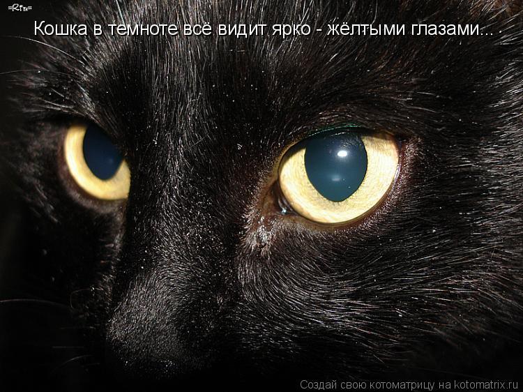 Котоматрица: Кошка в темноте всё видит ярко - жёлтыми глазами...