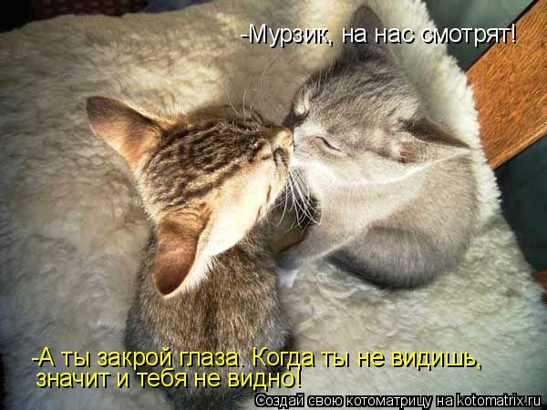 Котоматрица: -Мурзик, на нас смотрят! -А ты закрой глаза. Когда ты не видишь,  значит и тебя не видно!