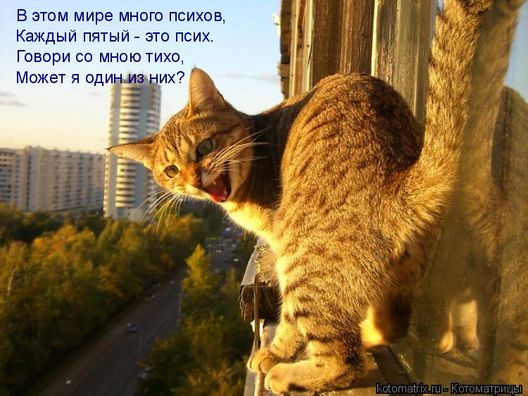 Котоматрица: В этом мире много психов, Каждый пятый - это псих. Говори со мною тихо, Может я один из них?