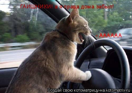 Котоматрица: - АААААА ГАИШНИКИ! а я права дома забыл!