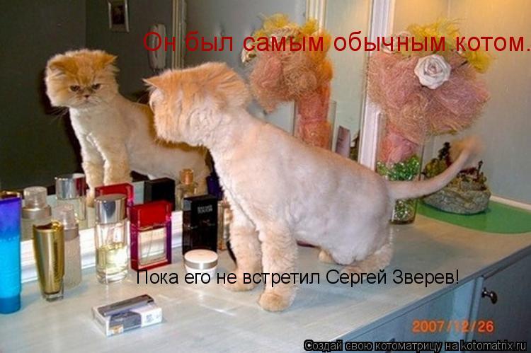 Котоматрица: Он был самым обычным котом... Пока его не встретил Сергей Зверев!