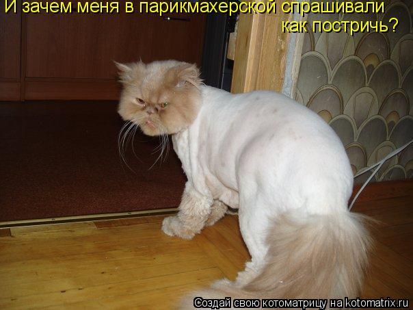 Котоматрица: И зачем меня в парикмахерской спрашивали как постричь?