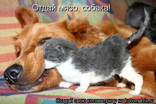Котоматрица: Отдай мясо, собака!