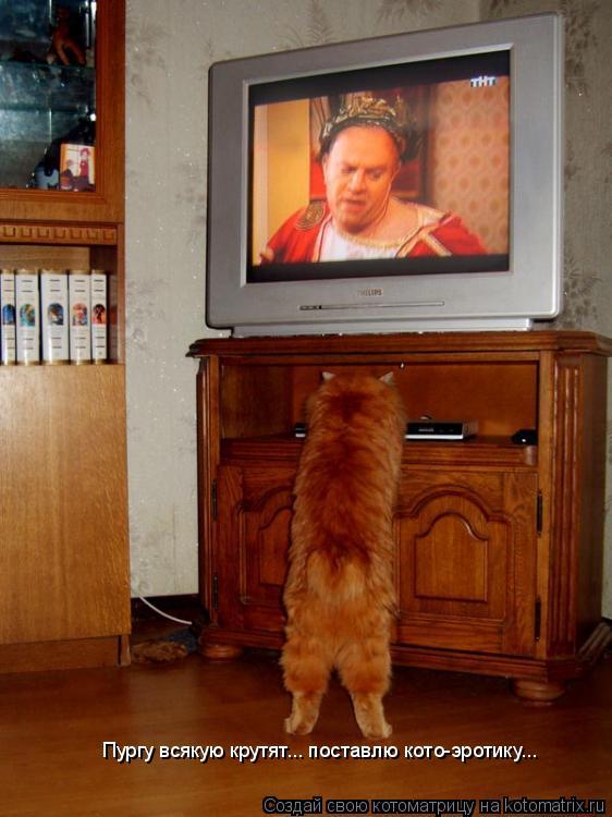 Котоматрица: Пургу всякую крутят... поставлю кото-эротику...