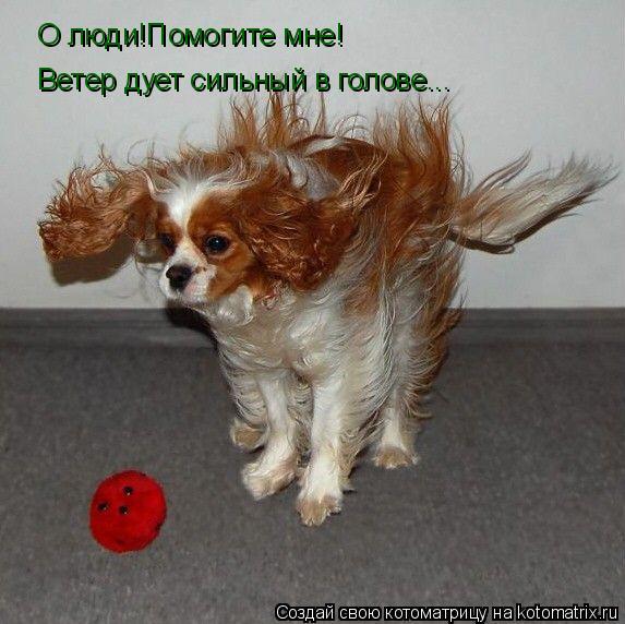 Котоматрица: О люди!Помогите мне! Ветер дует сильный в голове...