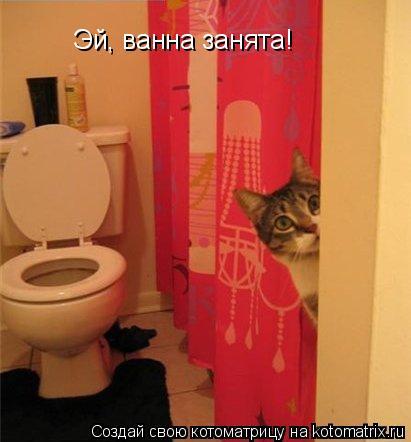 Котоматрица: Эй, ванна занята!