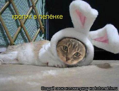 Котоматрица: кролик в пелёнке