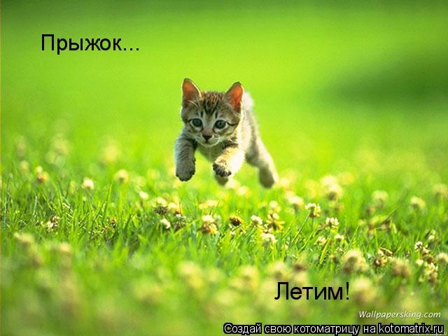 Котоматрица: Прыжок... Летим!