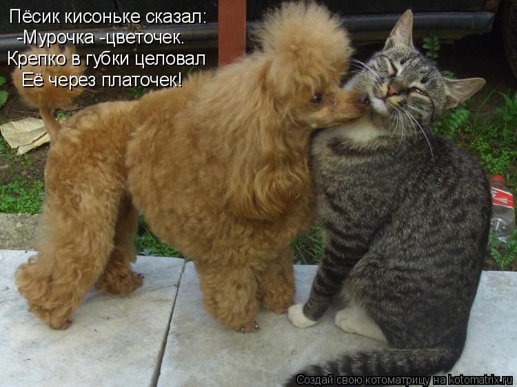 Котоматрица: Пёсик кисоньке сказал: -Мурочка -цветочек. Крепко в губки целовал Её через платочек!