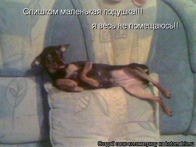 Котоматрица: Слишком маленькая подушка!!! я весь не помещаюсь!!