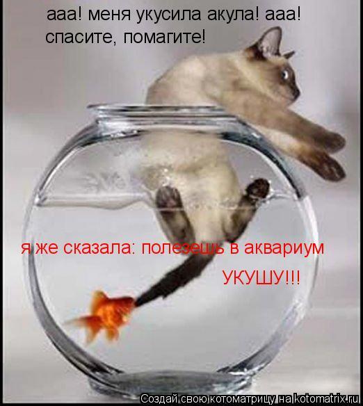 Котоматрица: ааа! меня укусила акула! ааа! спасите, помагите! я же сказала: полезешь в аквариум УКУШУ!!!