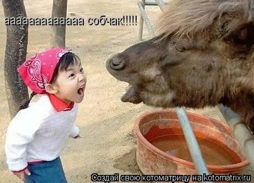 Котоматрица: ааааааааааааа собчак!!!!!