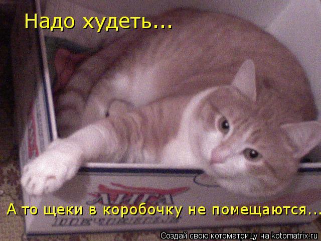 Котоматрица: Надо худеть... А то щеки в коробочку не помещаются...