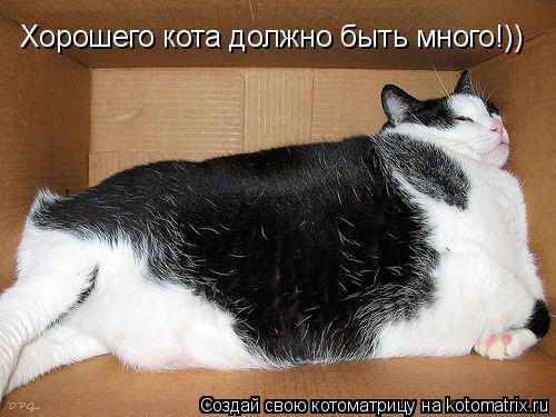 Котоматрица: Хорошего кота должно быть много!))