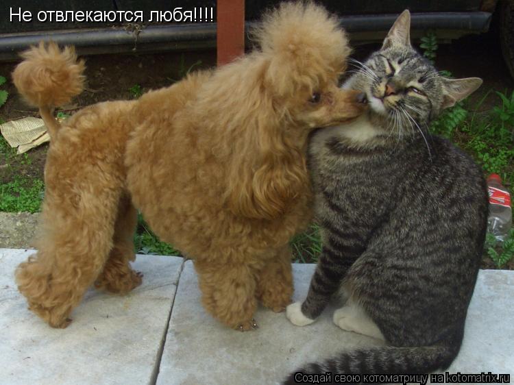 Котоматрица: Не отвлекаются любя!!!!