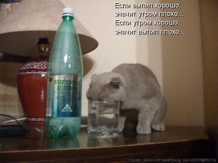 Котоматрица: Если выпил хорошо, значит утром плохо... Если утром хорошо, значит выпил плохо...