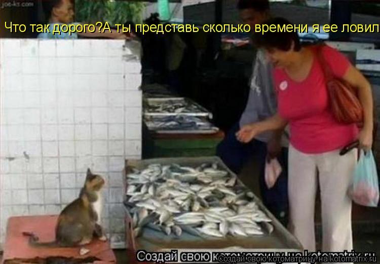 Котоматрица: Что так дорого?А ты представь сколько времени я ее ловил!!!!!!!!