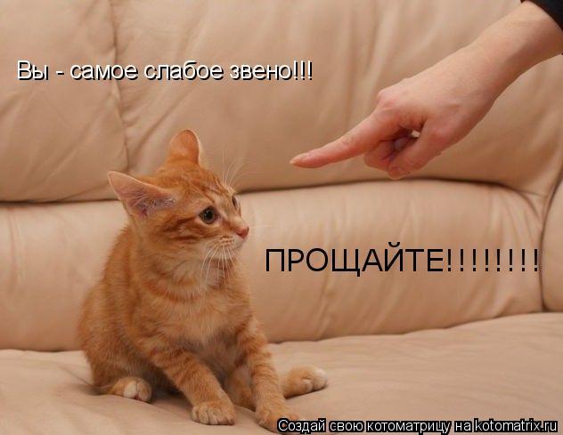 Котоматрица: Вы - самое слабое звено!!! ПРОЩАЙТЕ!!!!!!!!