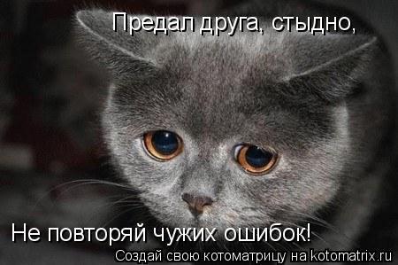 Котоматрица: Предал друга, стыдно, Не повторяй чужих ошибок!