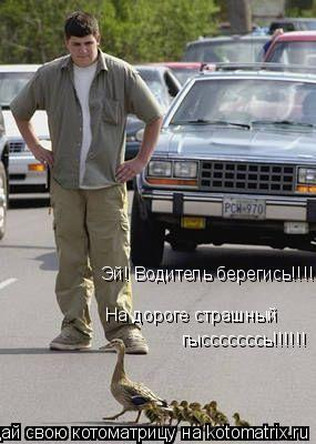 Котоматрица: Эй! Водитель берегись!!!!!! На дороге страшный гысссссссь!!!!!!