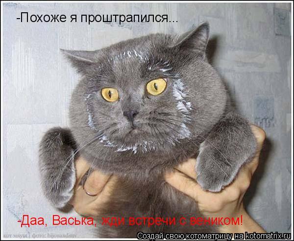 Котоматрица: -Похоже я проштрапился... -Даа, Васька, жди встречи с веником! -А вени -А вени