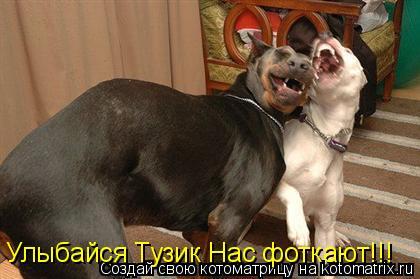 Котоматрица: Улыбайся Тузик Нас фоткают!!!