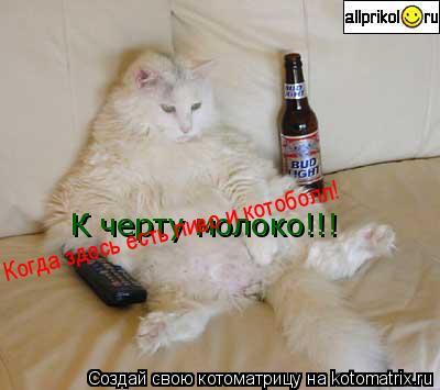 Котоматрица: К черту молоко!!! Когда здесь есть пиво и котоболл!