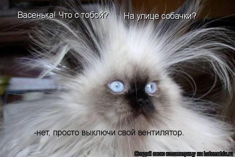 Котоматрица: Васенька! Что с тобой? На улице собачки? -нет, просто выключи свой вентилятор.