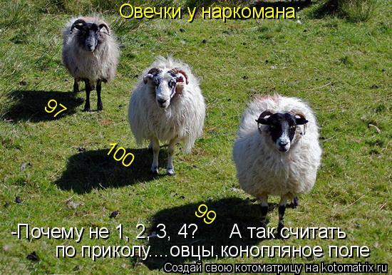 Котоматрица: Овечки у наркомана: 97          100               99  по приколу....овцы,конопляное поле -Почему не 1, 2, 3, 4?      А так считать