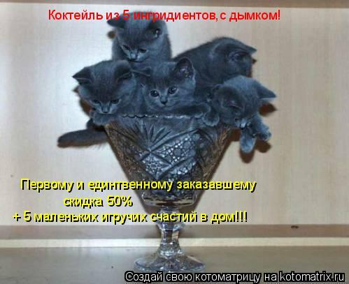 Котоматрица: Коктейль из 5 ингридиентов,с дымком! Первому и единтвенному заказавшему скидка 50% + 5 маленьких игручих счастий в дом!!!