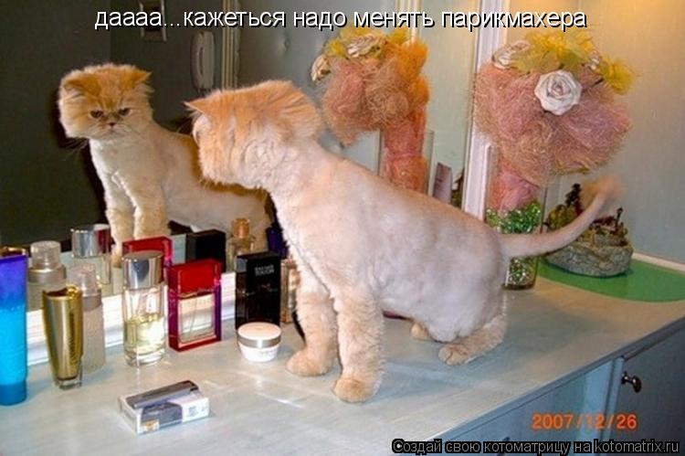 Котоматрица: даааа...кажеться надо менять парикмахера