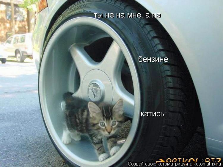 Котоматрица: ты не на мне, а на бензине катись